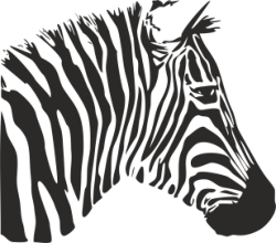 Zebra Stencil Free Vector Cdr