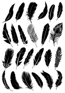 Black Feather Vector Collection Free Vector Cdr