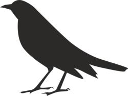Halloween Crow Silhouette Free Vector Cdr