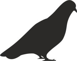 Bird Dove Silhouette Vector Free Vector Cdr