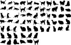 Cats Collection Vector Silhouette Free Vector Cdr