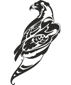 Hawk Vector Art Free Vector Cdr