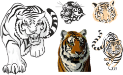 Tiger Stickers For Cars Free Vector Cdr