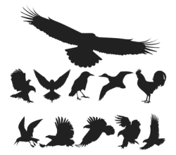 Free Vector Birds Pack Free Vector Cdr