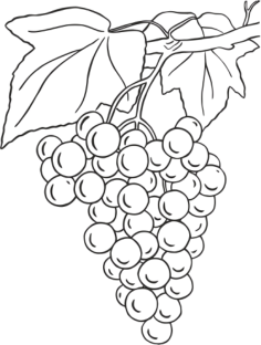 Grapes Design Free Vector Cdr