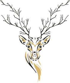 Deer Sketch Free Vector Cdr