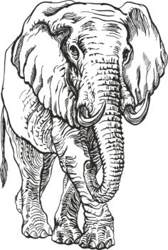 Elephant Engr Vector Free Vector Cdr