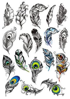 Peacock Feather Vector Set Free Vector Cdr