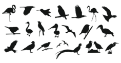 Collection Of Birds Free Vector Cdr