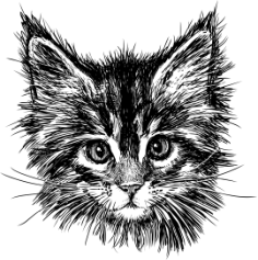 Hand Drawn Cat Free Vector Cdr