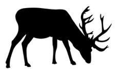 deer grazing Free Dxf for CNC