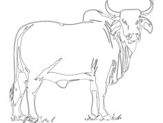 bull Free Dxf for CNC