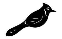 bird bluejay Free Dxf for CNC