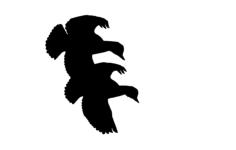 ducks flying cut Free Dxf for CNC