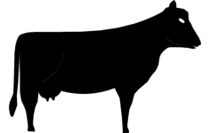 cow Free Dxf for CNC