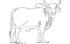bull Free Dxf File for CNC