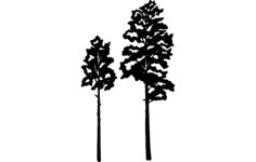 aspen tree vector Free Dxf File for CNC