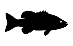 fish silhouette Free Dxf File for CNC