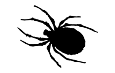 spider Free Dxf File for CNC
