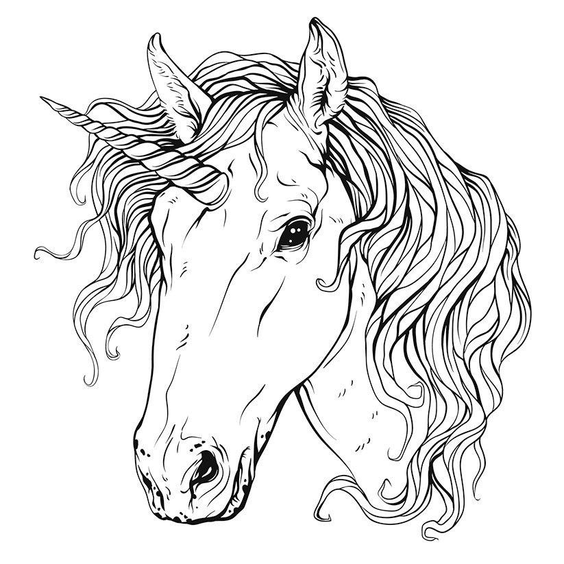 Unicorn Head Free Vector Cdr